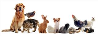 animaux-de-compagnie-2813588